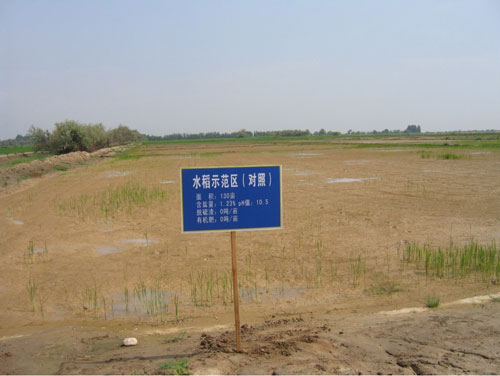 土地改良前后的对照田